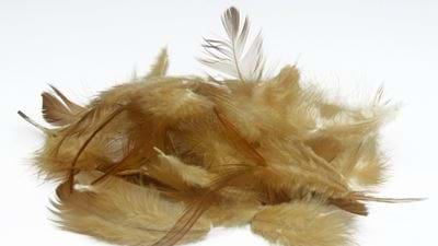 Lund team turns chicken feathers into food