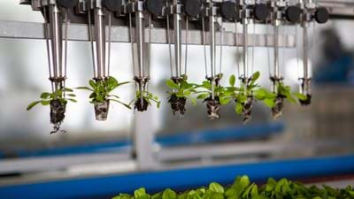 BASF agrees to buy Bayer's vegetable seeds business for €1.7bn