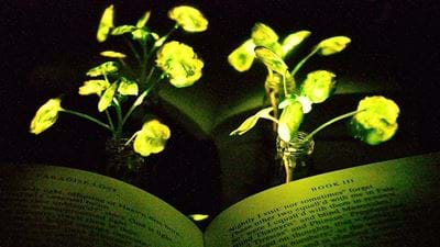 MIT turns living plants into desk lamps