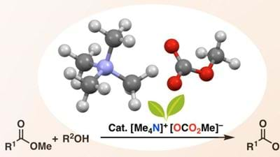 Metal-free catalyst for ester synthesis