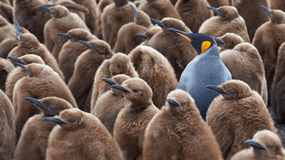Group Interview: How to Stand Out From the Crowd
