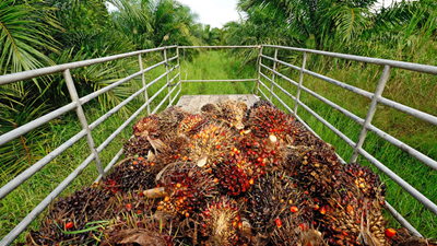 Reducing the environmental impact of palm oil production