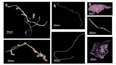 Behold the Plastic Age: synthetic fibres found in fossil record